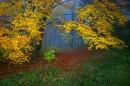 Арка в осень
