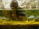 Рыба в аквариуме.