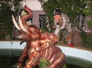 Такие слоны типа водятся в бассейне возле наших апартаментов...