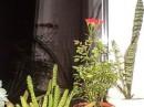 Одна из моих роз