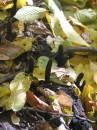в упор не пойму, что за черные длиннющие грибы на поленьях растут?