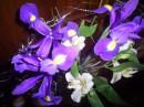 Любимые цветочечки!!!!!