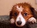 - Ненавижу этот дождь!