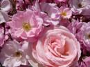 Розовый кадр