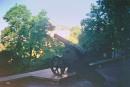 Пушка на Черниговском валу (старое ленточное фото)