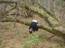 И на деревьях висит там всякое