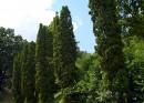 Аллея киевского ботанического сада