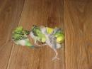"""фото волнистых попугаев  от  """"а"""" до """"я"""".  от www.meblan.com.ua"""