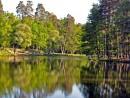 Два берега,два леса