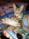 Жара влияет даже на кошек) Сил нет, сморило!
