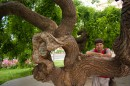Кривоватое Дерево :))