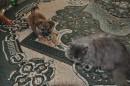 найкращі друзі - собаки і коти