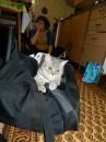 Кошка спаковалась!
