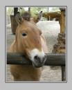Снимок сделан в зоопарке,