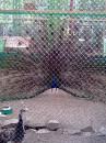 птичка из птичника в Прибое