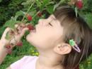 Моя племяшка Анютка в малиннике