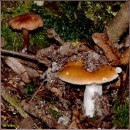 Гриби / Mushrooms