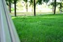 Зеленая, зеленая, трава
