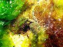 Крабик под водой