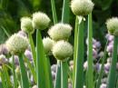 трава в огороде