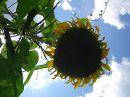 Сложно представить себе нашу Землю без цветов. Как они радуют сердце! Давайте превратим нашу планету в цветущий сад!