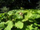 Незабываемая экскурсия в самый прекрасный зеленый парк любви Софиевку