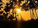 На закате в летний вечер Все как будто говорит: Отдохнем… и станет легче На земле прекрасной жить.  Пахнет травами и дымом Облака в сияньи все, Как бы мне хотелось вечно Жить в природной красоте