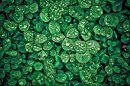Вот такой я вижу нашу жизнь. Зелёной, яркой и контрастной! Берегите природу и сбережете жизнь