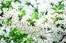 Весна =)