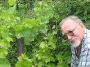 Однажды утром дедушка нашел на своем винограднике совсем маленького лягушонка. Это чудо, на которое мы, к сожалению, редко обращаем внимания живя в большом городе.