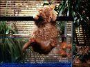 Всем известно, что кошки неравнодушны к водным процедурам. Некоторые просто «обожают» поплавать.