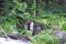 Сиануквиль джунгли
