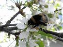 весна сбор пыльцы