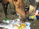 Перед подъемом на горы сделали остановку. Лошади, гулявшие сами по себе подошли пообщаться, одной из них очень понравился кетчуп.