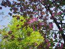 весною.. біля нашого будинку