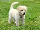хочу себе такую собачку