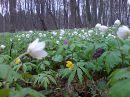 ... весна )