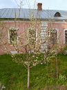 Монастырская весна