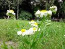 В Батаническом саду.