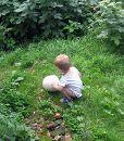 Увидеть гриб-дождевик во дворе - событие. Особенно в 2 года