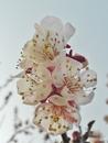Прозрачное весны дыхание...