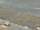 так выглядит настоящая соль Мертвого моря