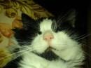 Мой любимый кот Филипп