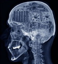 Заключение: опилок в голове не обнаружено
