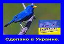 Сделано в Украине
