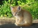 Только неподумайте чтто задрот или бот! просто классный котик!))