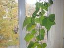 желто-зелёная листва за окном отнюдь не весна!