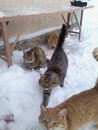 Коти требують їсти. Страйк котів