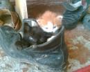мои котята:))))