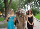 Верблюд так слюни распускал:)